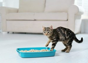 Top 9 Vacuums For Kitty Litter